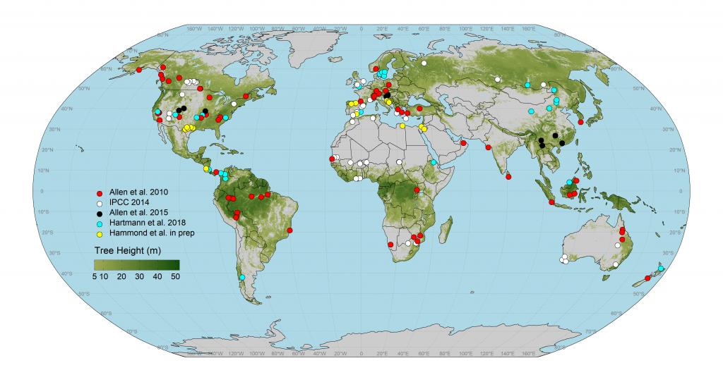 global mortality map